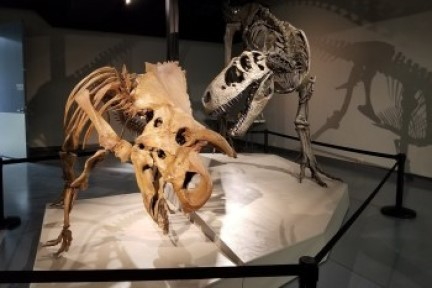 Photo of two dinosaur skeletons