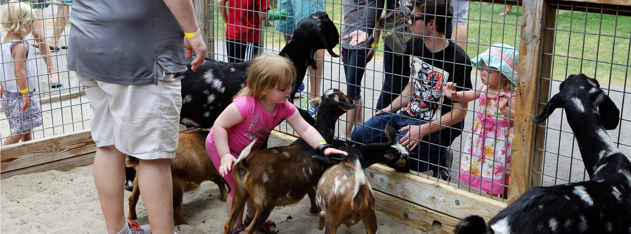 Photo of petting zoo
